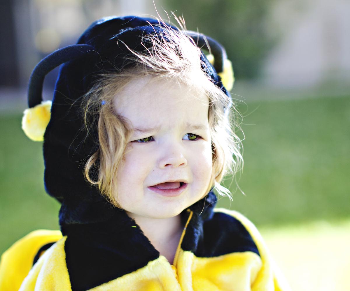 Con la miel en los labios: balance de tres años y medio en la colmena